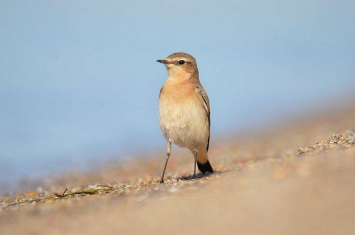 На острове Малый Жемчужный собрались перелётные птицы