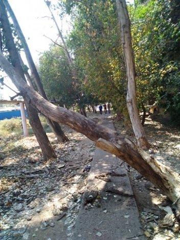На Хибинской падают деревья