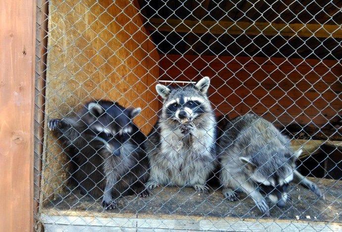 Фото животных зоопарка «Баба Фрося» возмутили астраханцев