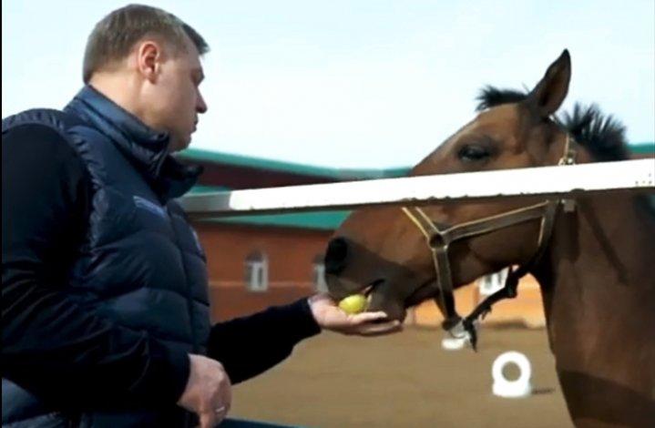 Губернатор Игорь Бабушкин и кони