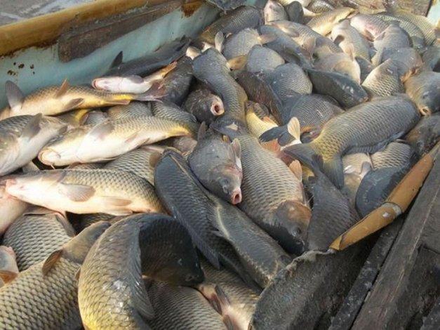 Под Астраханью артельщики скрывают свои рыбные запасы