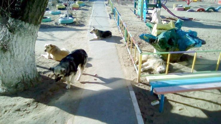 Детскую площадку в Астрахани оккупировали бродячие псы