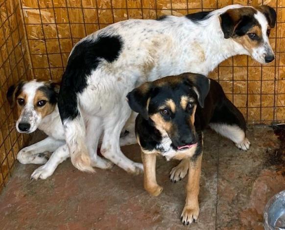 Откуда в Астрахани так много собак?