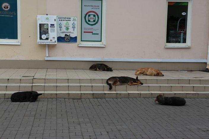 Астраханским собакам откроют ещё один приют