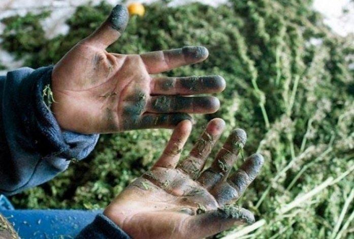 В Астрахани задержали двух любителей марихуаны