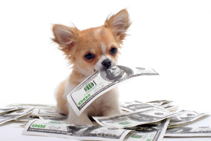13 тысяч рублей за голову: о цене бродячих собак астраханским налогоплательщикам