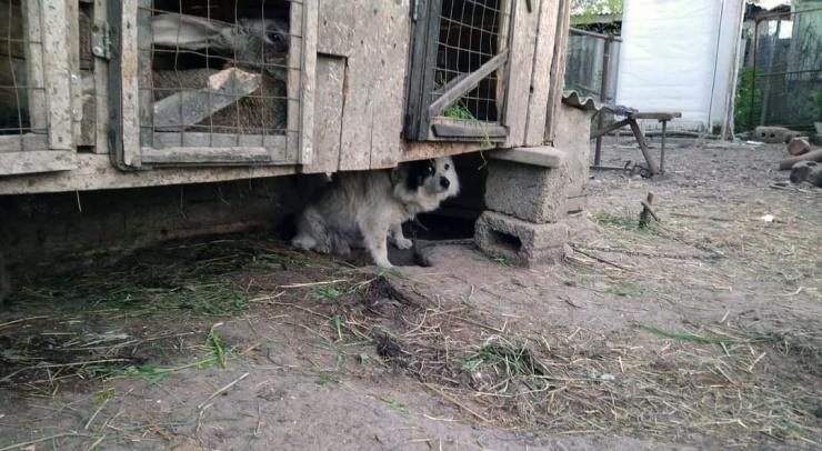 На депутата астраханской облдумы Дунаева напала собака