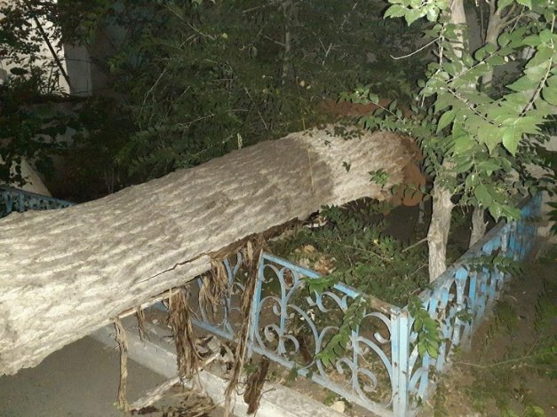 В Астрахани дерево рухнуло на детскую площадку