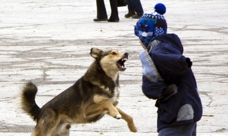 Следком занялся нападением бродячего пса на юного астраханца