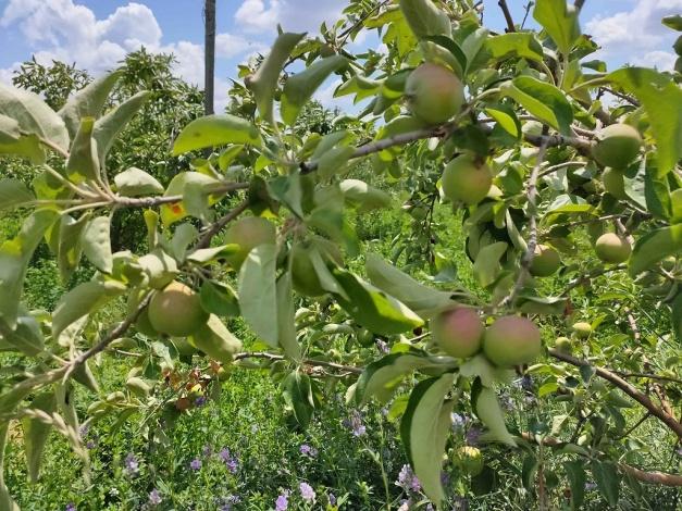 Фермер Багметов: Астраханская земля создана для развития садоводства и бахчевых культур