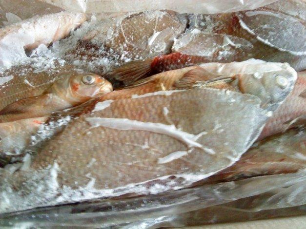 На рыбопромышленном предприятии работал опасный холодильник