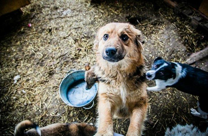 «Чистый город» вновь возьмётся за бродячих астраханских собак