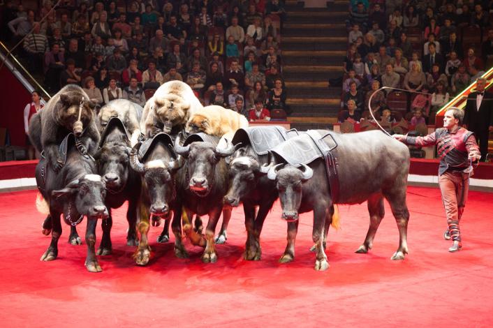 В Астраханском цирке начинаются гастроли программы «Мишки-джигиты»