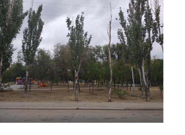 Старый сквер в Астрахани станет спортивным