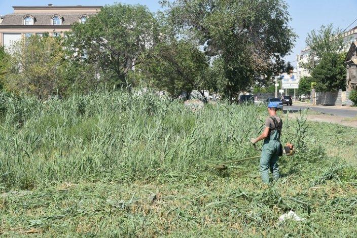 Мэрия Астрахани вышла на борьбу с сорняками