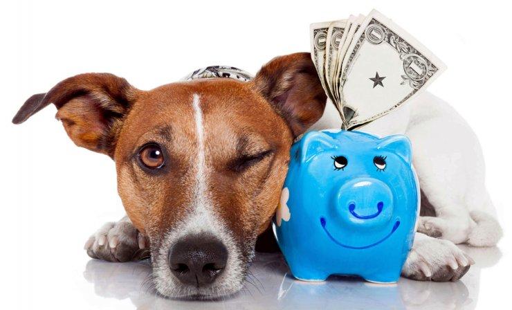 Деньги астраханских налогоплательщиков продолжают тратить на собак