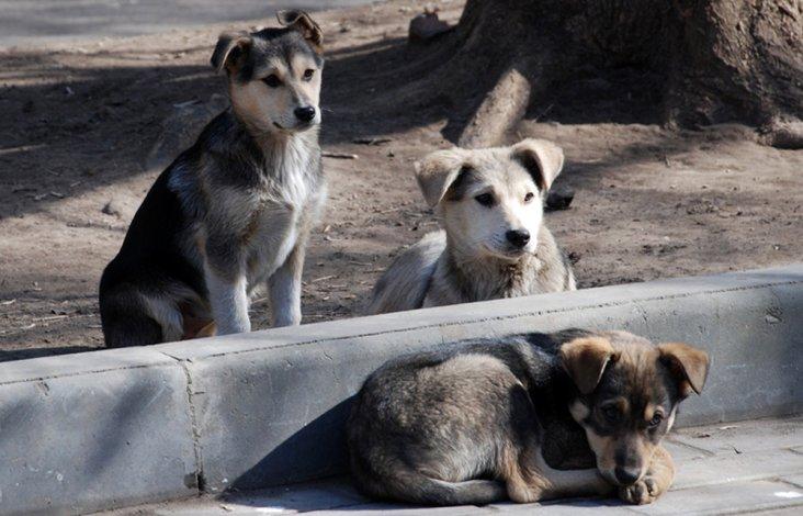 Астраханские зоозащитники обратились в Госдуму