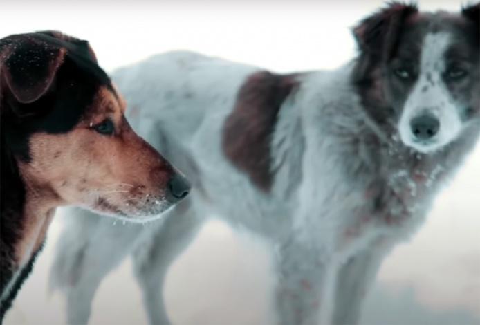 Что делать с собаками в Астрахани