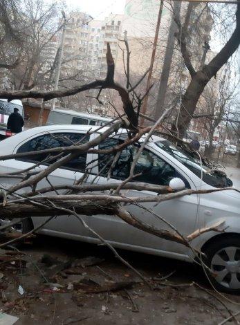 В Астрахани на Баха рухнуло дерево
