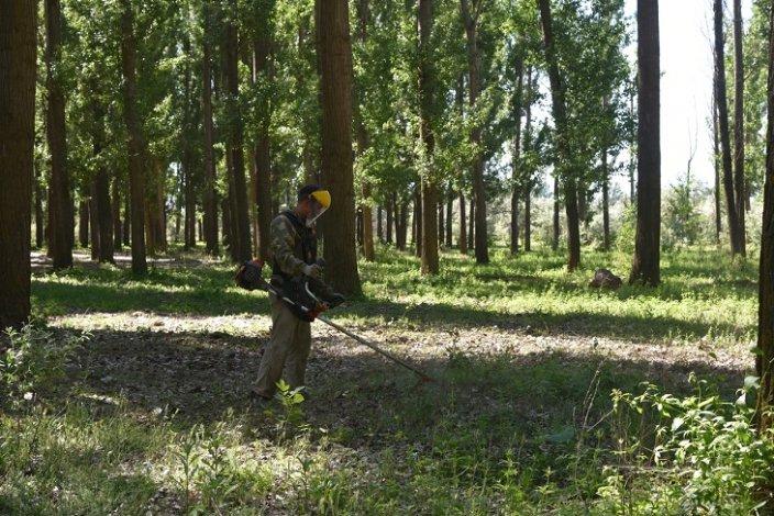 Операция «МАК-2020» уничтожает в Астрахани траву
