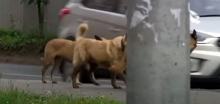 Четверть миллиона оскаленных пастей: что грозит Астрахани при нерешении собачьего вопроса