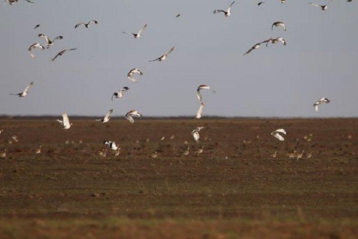 Под Астраханью наблюдается миграция редких птиц