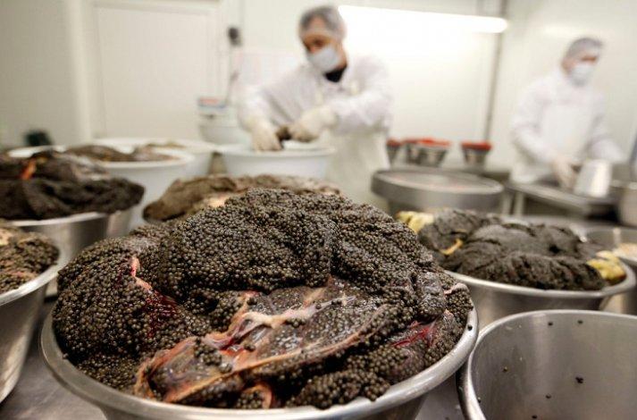 В Астрахани производилась чёрная икра из сомнительного сырья