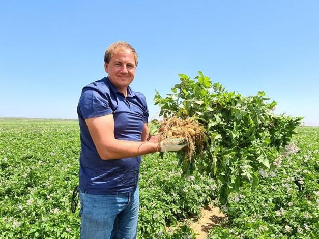 Астраханские фермеры выращивают не только лучший в ЮФО картофель, но и бананы