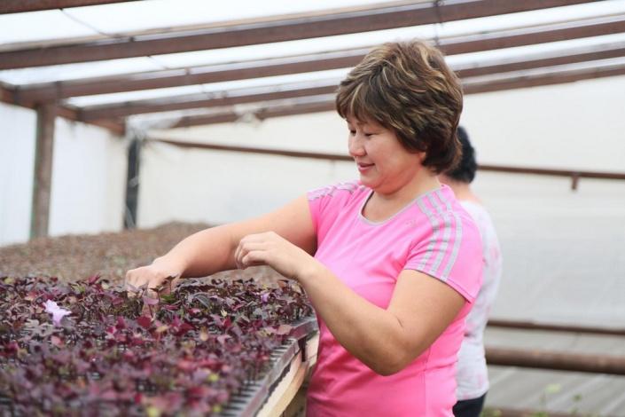 Власти обещают посадить в Астрахани полмиллиона цветов