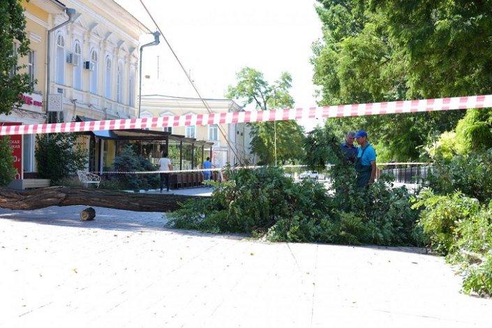 В Астрахани продолжают падать деревья