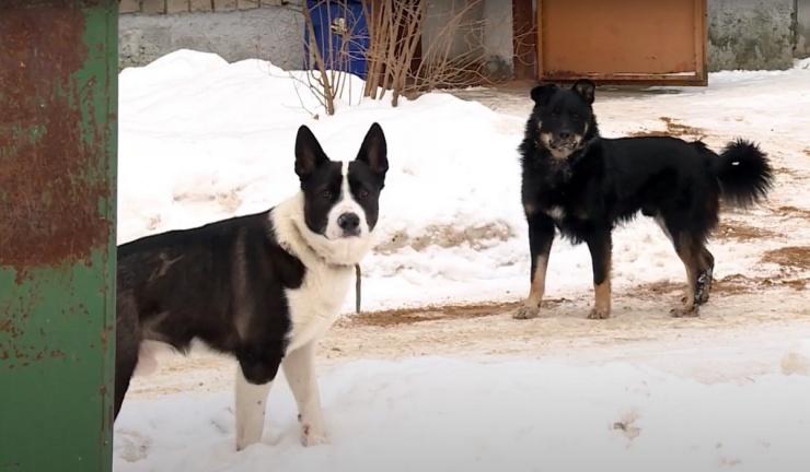 Астраханские чиновники попались на махинациях с контрактами на отлов собак