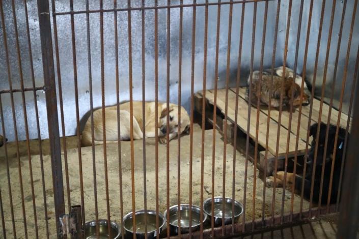 В Астраханской области открылся новый приют для бездомных животных