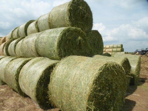 Астраханские аграрии занялись заготовкой кормов