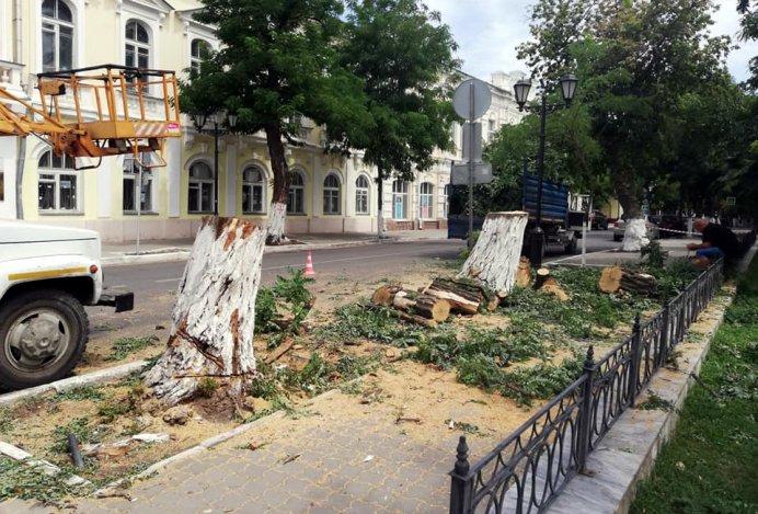 В центральном сквере Астрахани обрезали деревья
