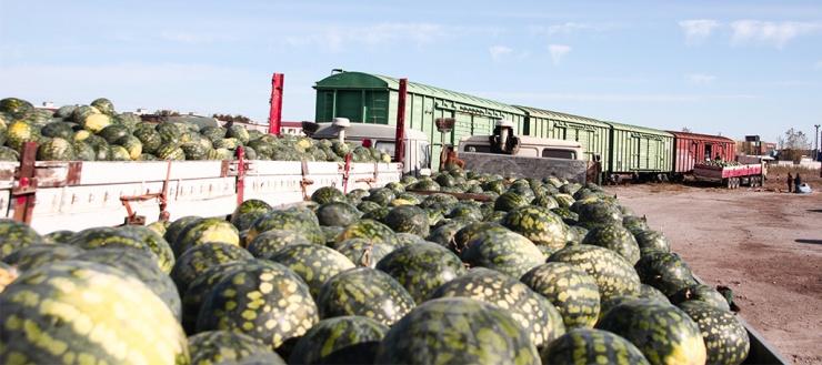 По железной дороге из Астраханской области в три раза больше отправлено овощей