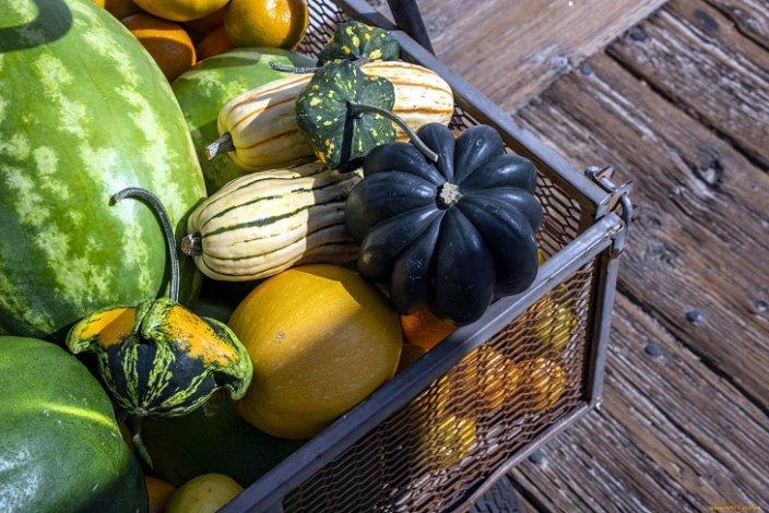 В Астрахани появились новые сорта бахчевых и овощных культур