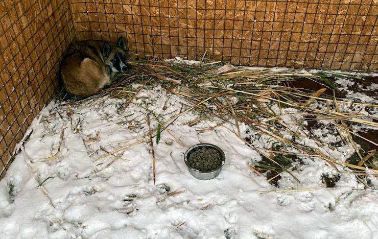 Общественники заявили о голодных собаках в астраханском приюте