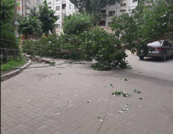 В Астрахани дерево совершило опасное падение